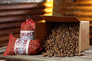 In-Shell Pecans - 5 lb Red Mesh Bag